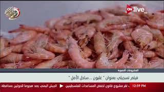 Download فيلم تسجيلي بعنوان ″غليون.. ساحل الأمل″ أكبر مشروع استزراع سمكي في الشرق الأوسط Video
