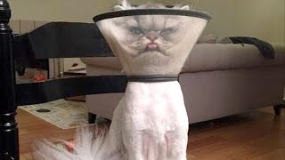 Download There's absolutely nothing funnier than cats - Funny cat compilation Video