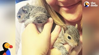 Download Rescue Squirrel Visits Rescuers with Her Babies | The Dodo Video