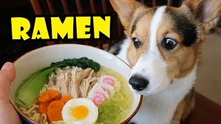 Download CORGI RAMEN - Homemade DOG Friendly DIY || Life After College: Ep. 567 Video