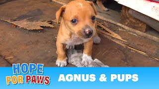 Download Dog had given birth in a shipping yard, but the guard didn't want us there! Video