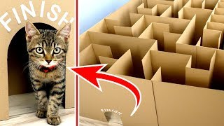 Download GIANT Maze Labyrinth for Cat Kittens. Can they EXIT? Video