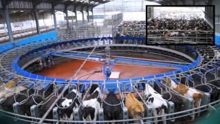 Download 70 Point De-Laval Rotary Milking Parlour. Glenapp Farm Ayrshire.DairyCo. Video