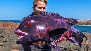 Download 10 Most Unique Fish In The Ocean! Video