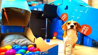 Download Build a DIY Agility Course for Dogs with Cardboard Video