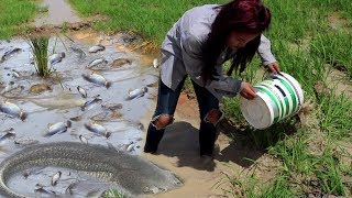 Download Smart Girl Catching A Lot of Fish By Hand - Cambodia Traditional Fishing Video