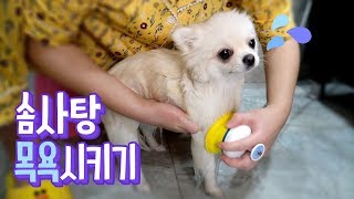 Download ENG SUB Bathing our dirty Cotton candy * Review of Pethroom's Shower head Video