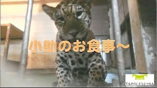 Download 小助のお食事〜161201 Video