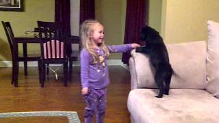 Download 4 Year Old Madalyn gets Surprised with a Black Lab Puppy (Rapunzel) Video