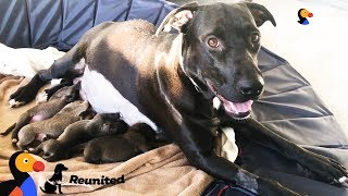 Download Mother Dog Reunited With Her Puppies All Grown Up | The Dodo Reunited Video