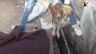 Download Sick Stray Puppy Heals Thanks To His Rescuers   The Dodo Video
