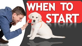 Download When Should you Start Training your Dog? Video