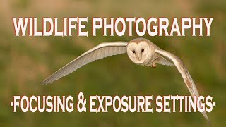 Download WILDLIFE PHOTOGRAPHY CAMERA SETTINGS: Focusing and Exposure Video