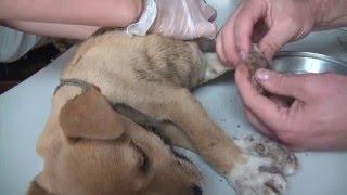 Download Half dog - half duck: Endless Mangoworms. Video