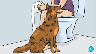 Download This Is Why Dogs Follow You Into The Bathroom. I Never Knew This! Video