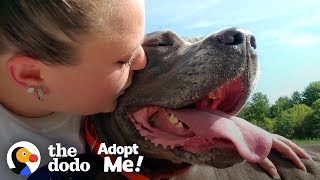 Download 85-Pound Cane Corso Worked SO Hard To Be A Good Girl | The Dodo Adopt Me! Video