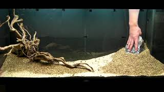 Download Aquarium Setup - Aquascape - Step by Step and Final Product - Live Planted Fish Tank Video