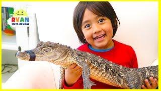 Download Surprise Ryan with Pet Crocodile! Video