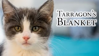 Download Tarragon's Blanket Video