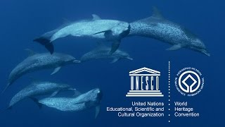 Download UNESCO's Marine World Heritage Video