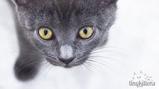 Download LIVE: The Stan Lee Kittens - TinyKittens Video