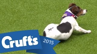 Download Rescue Dog Agility | Crufts 2015 Video