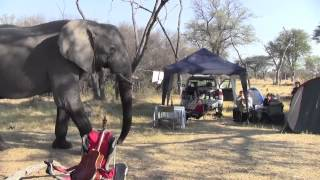 Download Elephant through our Campsite - Khwai River, Botswana 2012 Video