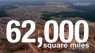 Download The Problem With Palm Oil | Fight for the Forests | TakePart Video