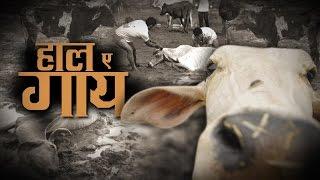 Download दर्द-ए-गाय : BJP हमेशा गौ माता की बात करती है लेकिन मोदी सरकार के राज में किस कदर बेहाल है गौ माता Video
