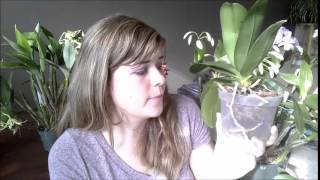 Download Aerial Roots Explored Video