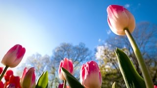 Download Music of nature. Flowering. Very nice video. Video