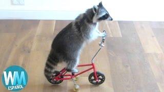 Download ¡Top 10 Animales Inteligentes! Video