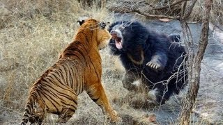 Download Biggest wild animal fights !! Video