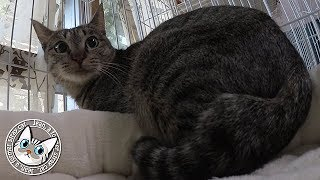 Download 【Jean & Pont 832】逃げる保護猫あんずちゃん撫でさせてよ 2017/11/25 保護猫育成記録 Jean & Pont Video