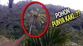 Download Sempat Direkam Warga!! Video Amatir Pohon Kelapa Berjalan ini Bikin Gempar!! Pertanda Apa ini? Video