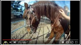 Download Nice Woman Helps A Horse Being Abused By Idiots - Good Job IMO Video