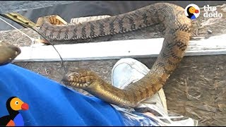 Download Man Feeds WILD SNAKE Friend A Snack | The Dodo Video