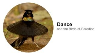 Download Dance: and the Birds-of-Paradise Video