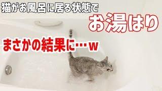 Download 猫がお風呂に居座るのでそのままお湯はりをしてみた結果 Video