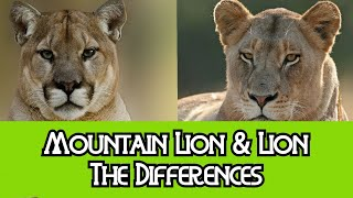 Download Lion & Mountain Lion - The Differences Video