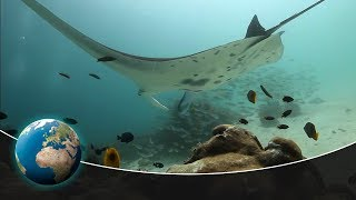 Download Predators of a different kind - The world of the unknown Sharks Video