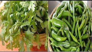 Download 2 महीने तक हरे धनिये और हरी मिर्च इस तरह करें स्टोर | How to store green chilly and green coriander Video
