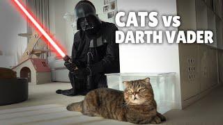 Download Cats vs Darth Vader Video