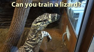 Download Can you train a lizard? Video