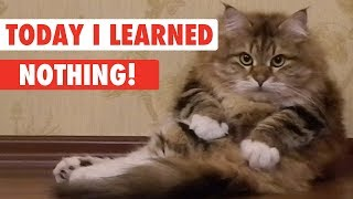 Download Today I Learned: Nothing! Video