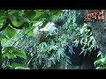 Download [극한직업/Extreme JOB] 중국 석청 채집꾼 제2부 Video