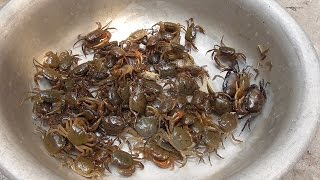 Download Vietnam street food - Cooking 100 Crabs for 4 People Family Dinner Meal in Vietnam Video