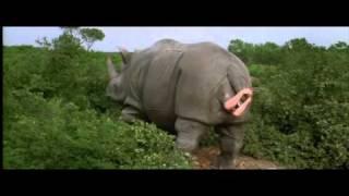Download Nashorn Video
