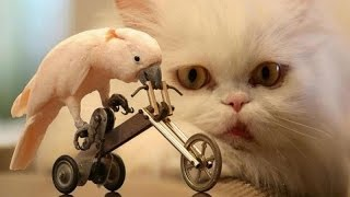 Download Animals & pets: Try not to grin or laugh challenge - Funny animal compilation Video