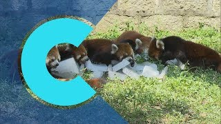 Download China's zoos help cool down animals in hot weather Video